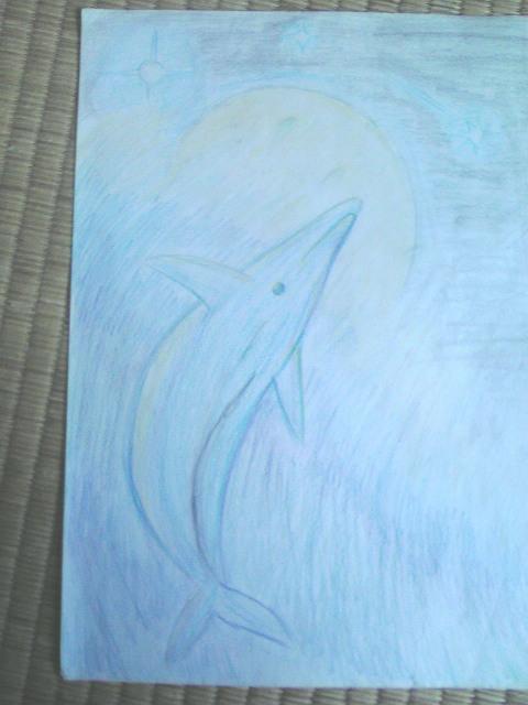 イルカと月