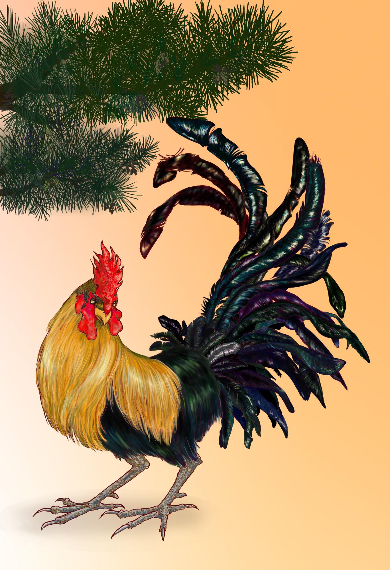 年賀状用鶏さん