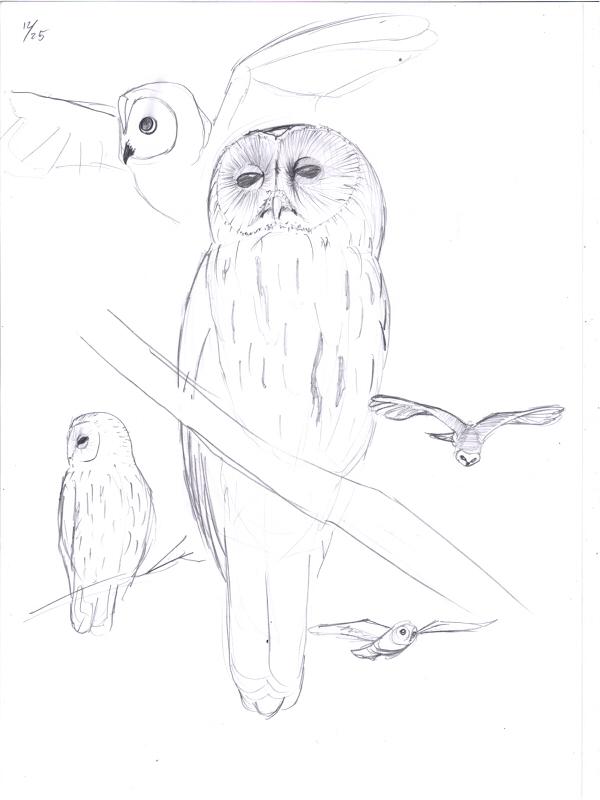 【模写】フクロウ