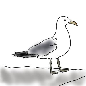 かっぱえびせん好きの鳥